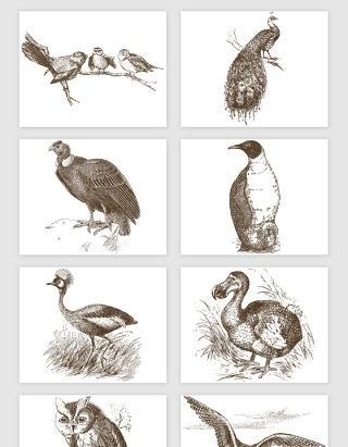手绘线描鸟类的矢量素材