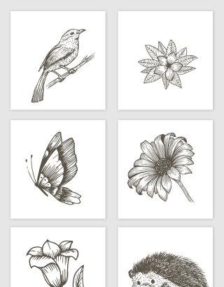 手绘素描动物植物素材