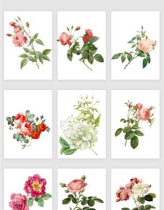 唯美高清花卉矢量素材