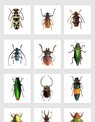 高清免抠彩色昆虫素材
