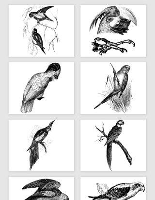 手绘线描的鸟类矢量素材