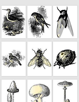手绘自然动植物元素矢量素材