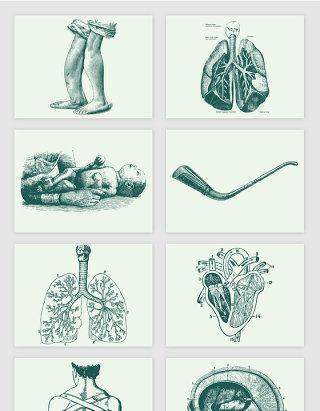 脑部心脏婴儿医用治疗人体结构素描手绘矢量