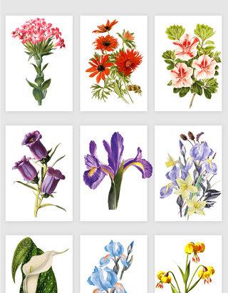 植物鲜花花朵矢量素材