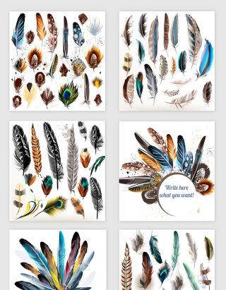 各种好看的多彩鸟类羽毛