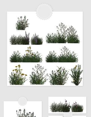 高清免抠植物草丛素材