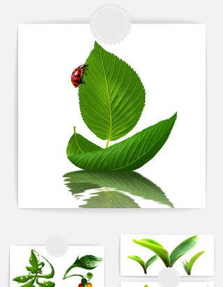 绿色树叶设计素材