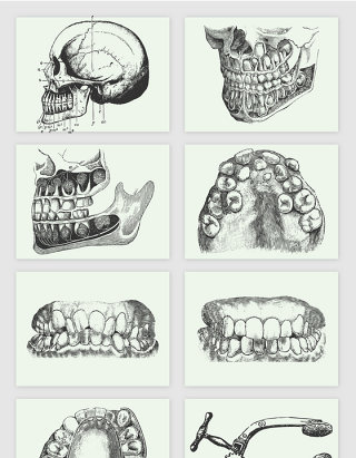 头颅牙齿素描手绘矢量元素