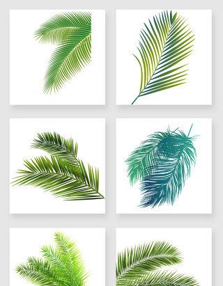 热带植物棕榈叶设计素材
