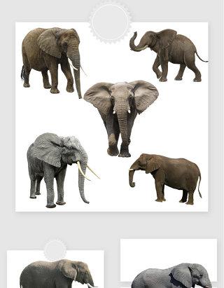高清免抠大象png素材