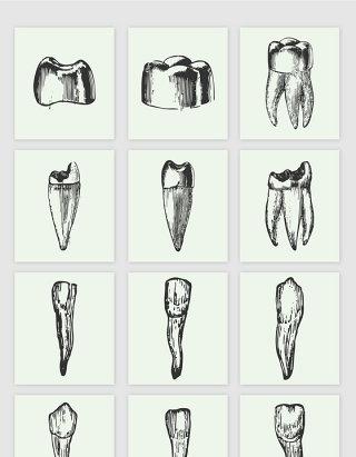 素描手绘牙齿矢量图形