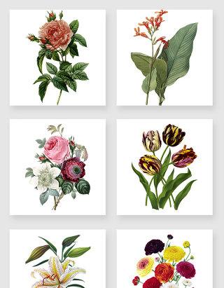 复古风格植物装饰素材合集