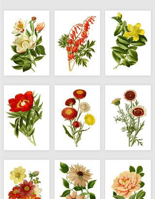 彩色手绘复古鲜花素材