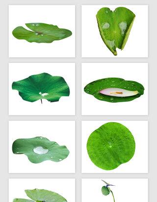 绿的绿荷叶荷花PNG免抠素材