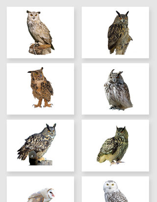 多角度遥望的猫头鹰免抠图设计素材