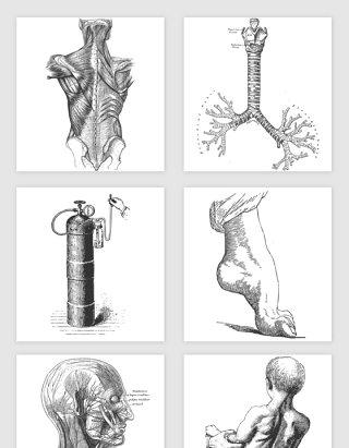 手绘素描人体肌肉结构内脏肺氧气机脚部又不