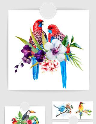 彩绘鸟类插画矢量素材