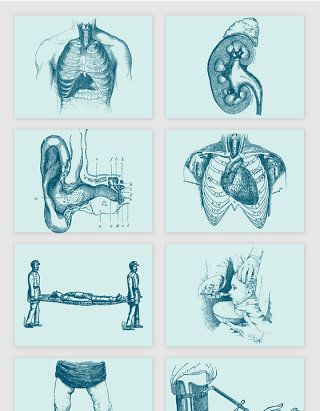 人体内脏耳治疗担架素描手绘朵矢量元素