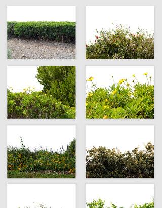 高清免抠绿植植物草丛