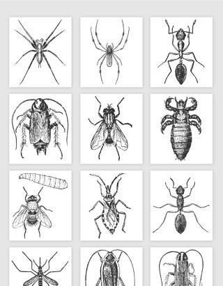 手绘的小昆虫矢量素材