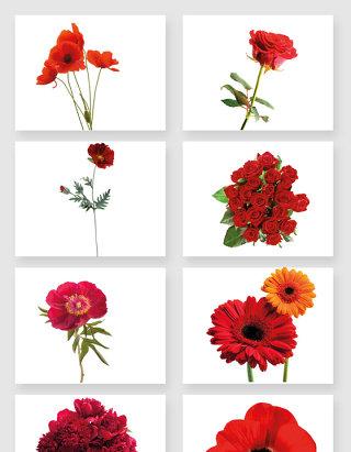红色鲜花装饰素材