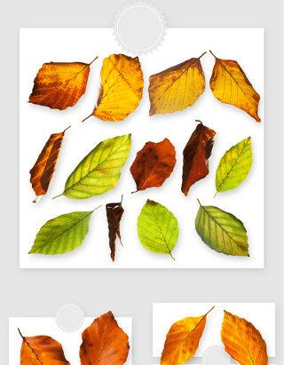 秋冬季植物树叶落叶枯叶PNG素材