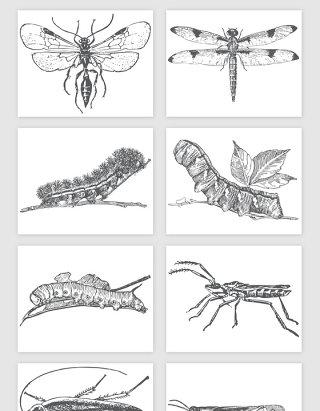 手绘小昆虫矢量素材 手绘 昆虫 小虫 虫