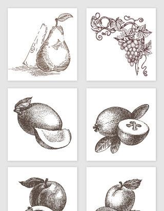 手绘各种水果黑白素材