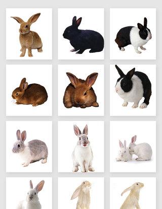 活泼可爱的兔子素材