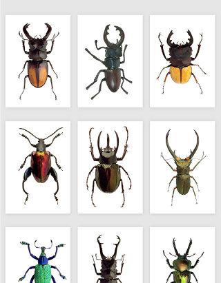 高清免抠png昆虫素材