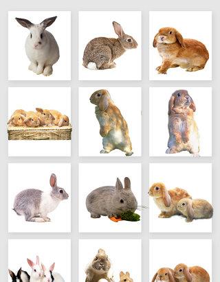 可爱的小兔子素材