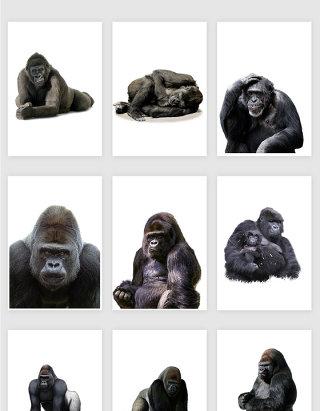 高清免抠黑猩猩png素材