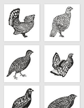 各种鸟类装饰素材合集