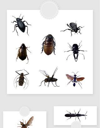 高清免抠昆虫飞虫素材