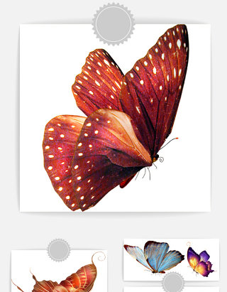 漂亮的彩色蝴蝶素材