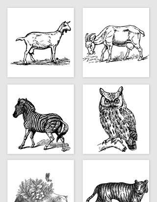 各种野生动物素材合集