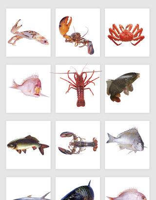 鲜活的海产品矢量素材