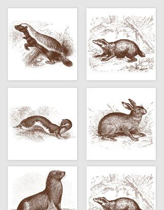 貉子兔子手绘插画矢量图形