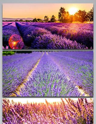 普罗旺斯美丽风景背景图