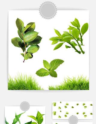 嫩绿色带水珠树叶素材