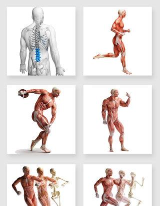 不规则图形人体设计素材