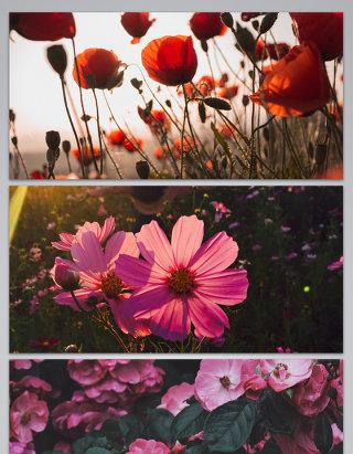 各种花儿玫瑰花朵情人节