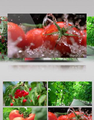 各种水果蔬菜唯美视频拍摄集锦