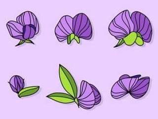 紫色的甜豌豆载体
