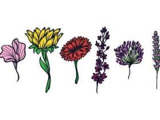 花卉插图集