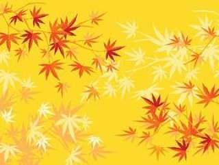 秋天或秋天日本槭树和树叶背景
