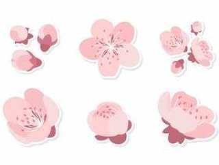 粉红色的梅花