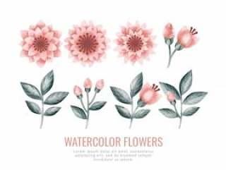 矢量水彩花卉和分支机构