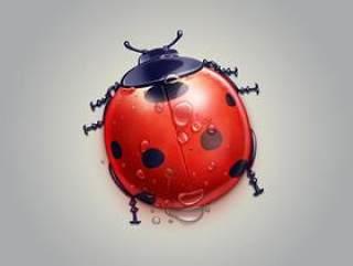 卡通瓢虫可爱小动物萌宠