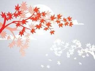 光滑的日本枫树植物和秋天枫叶背景